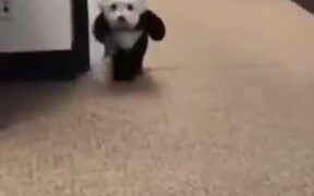 Who Wants To See A Panda Dog?