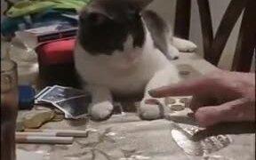 Human Teaching Cat To Flip A Coin