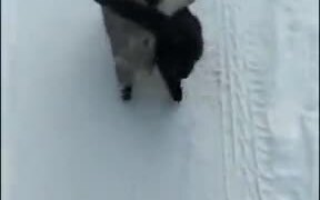 When Two Cats Are Best Buddies