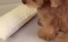 Dog Scared By Own Fart