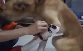 Dog Too Happy To Get Prosthetic Legs