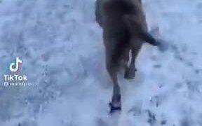 When A Dog Learns Happy Ramp Walk