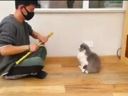Cat With Intense Acting Skill