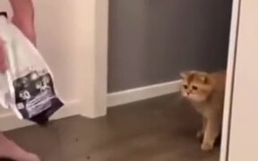 Cat Scared By A Huge Amount Of Food
