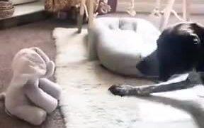 Dog Vs Peek A Boo Toy