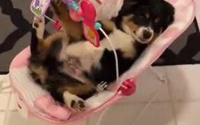 Dog Enjoying A Baby Crate