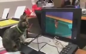Kittens Watching Tom And Jerry