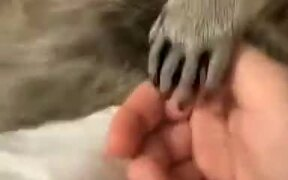 Scared Raccoon Wants To Hold Hands