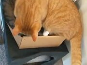 When There Is One Box But Two Cats