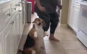 Dog Dancing On 2 Legs