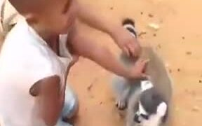 Animals Love Scratching By Humans