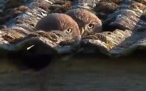 Spy Owls On The Job