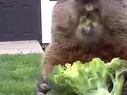 Does Broccoli Really Taste Good?