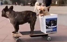Two Dogs Enjoying Electric Skateboard