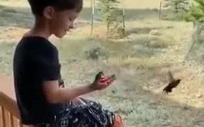 Patient Kid Feeds Hummingbirds From His Hands