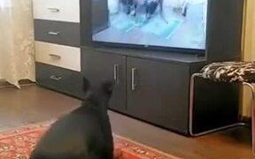Doggo Learns To Walk On Two Legs