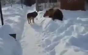 Doggo Ignores Bear, Bear Has A Hissy Fit