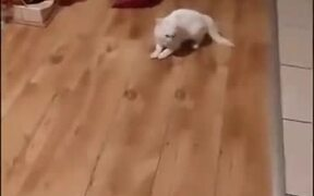 Catto And Doggo Do The Dance Of Death