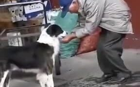 Bringing Water For A Thirsty Dog