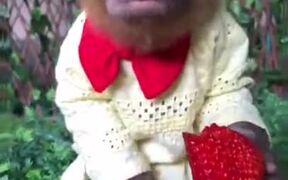 Monkey Loves Strawberry