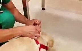 Doctor Dances With Puppy Before Giving A Vaccine
