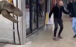 Pranking People With A Tyrannosaurus Rex Costume