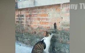 Funny Hilarious Cats..