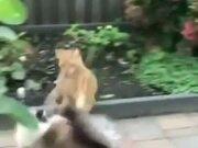 Fat Cat Has The Moves Of A Ninja