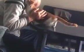 The Cat-Hating Grandpa