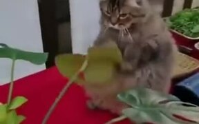 Catto Practices Some Boxing