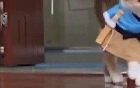 Cats Doing An Actual Catwalk