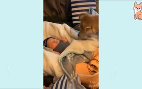 Cutest Puppies Compilation Ever