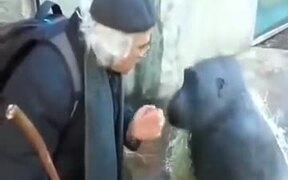 Chimpanzee And Old Man Engaged In AConversation