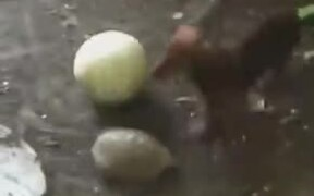 So Cute! Dog And Turtle Play With A Ball Together