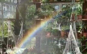 Stunning Rainbow In A Winter Garden