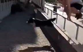 Doggo Beats Human To Parkour Like A Boss