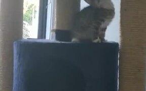 Little Kitty Vs Big Cat