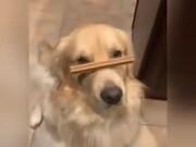 Doggo Balances Treat On Snoot