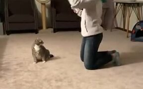 Cats Attack First, Ask Questions Later