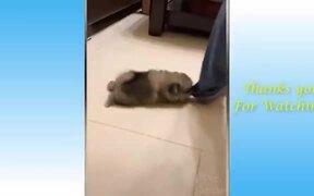 Funny Animals Compilation