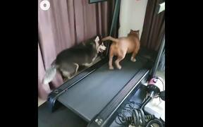 Dogs Running In Treadmill