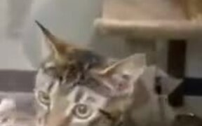 Shelter Kittens Fight To Be Chosen First