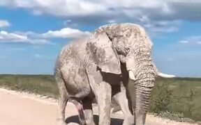 Elephant Covered With Clay