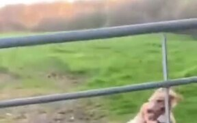 Dogs Jumping Over Fences In Funny Ways