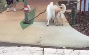 Brother Dog Lends A Helping Jaw