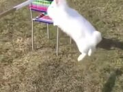 Cinematic Shots Of Bunny Jumping Over Ramps