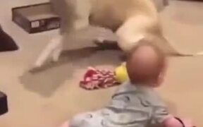 Baby Crawl Races Against Dog