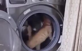 Washing Machine=Treadmill For Cats