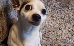 Dog Loses It When Given A Cucumber