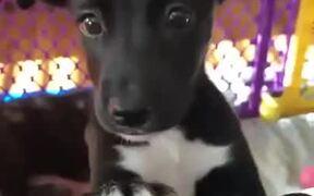Puppy Eyes Full Of Innocence